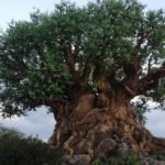disney's animal kingdom disney first getaway package